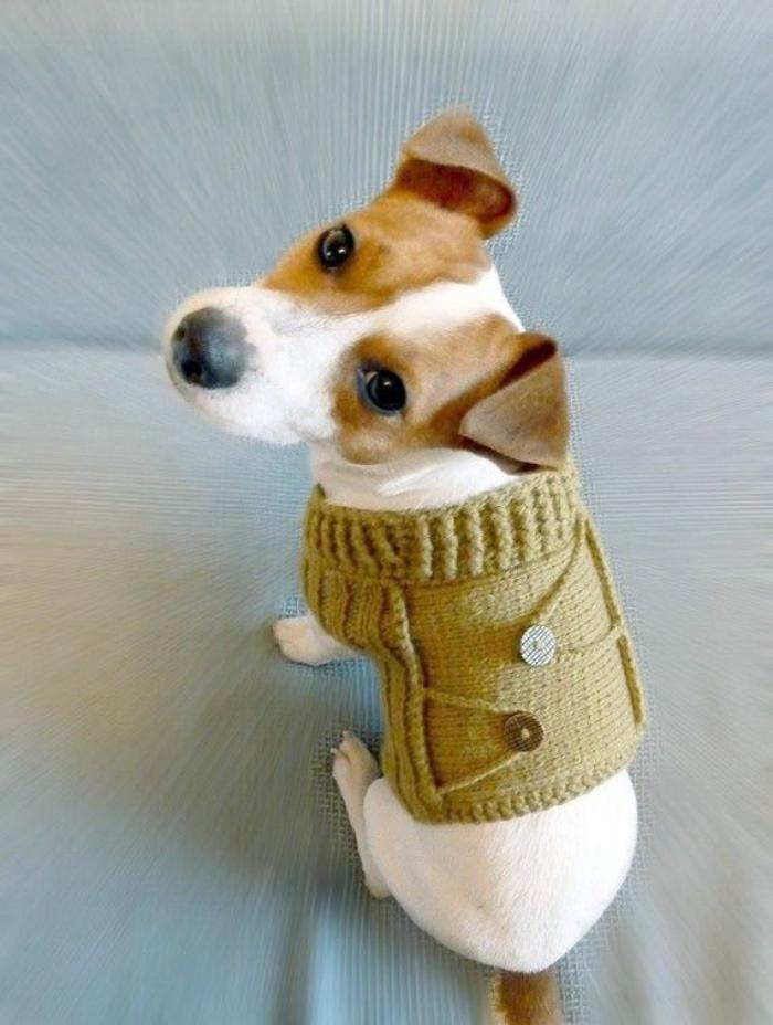 manteau-pour-chien-gilet-mignon-pour-chien