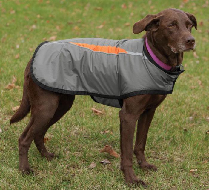 manteau-pour-chien-gris-joli-accessoire-pour-chien