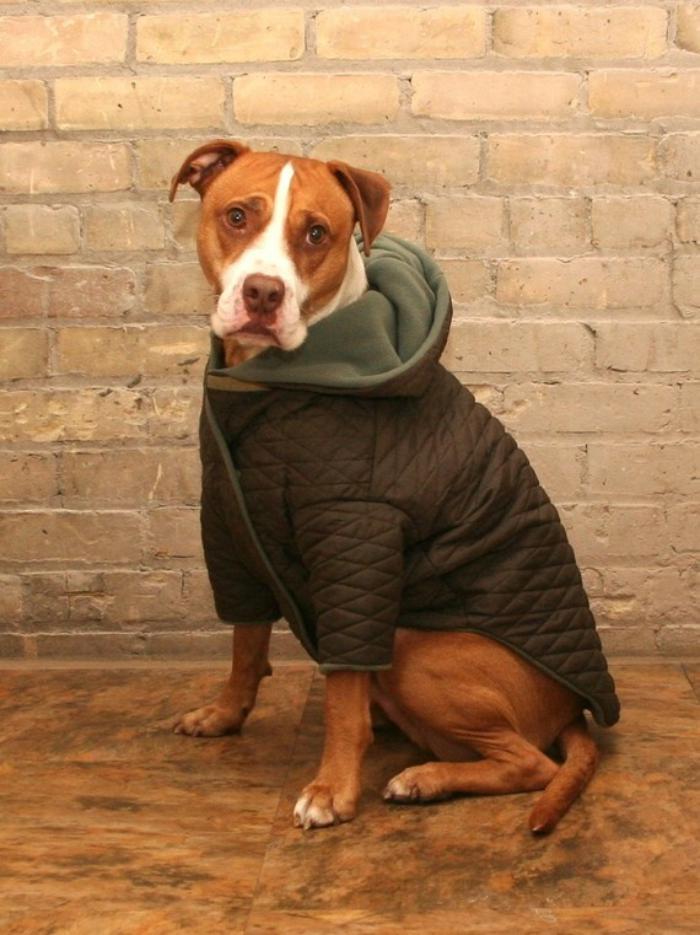 manteau-pour-chien-habiller-le-chien-en-beaux-vetements
