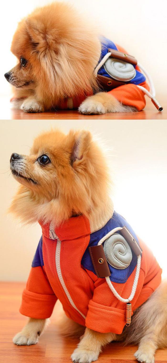 manteau-pour-chien-habiller-le-chien-avec-du-style