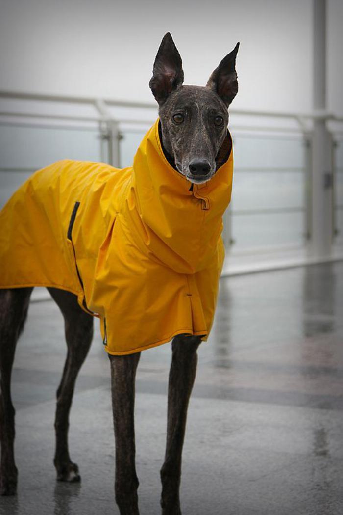 manteau-pour-chien-jaune-imperméable