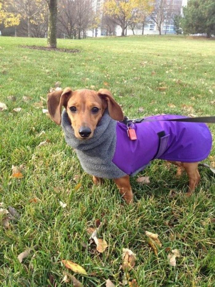 manteau-pour-chien-joli-accessoire-pour-chien