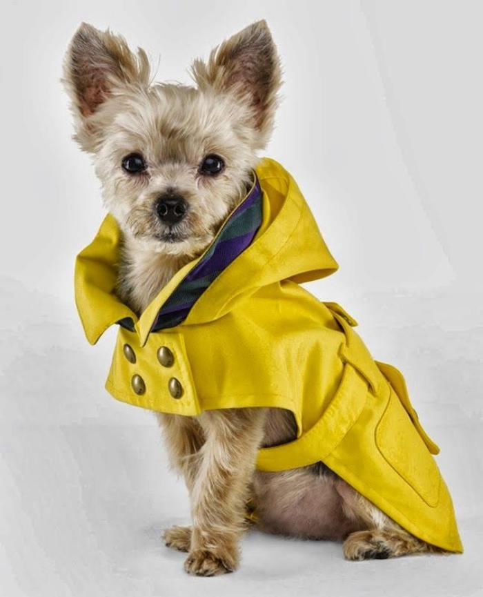 manteau-pour-chien-joli-manteau-de-pluie-pour-chien