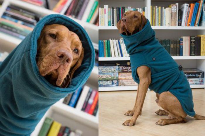 manteau-pour-chien-manteau-chien-en-textile-bleu