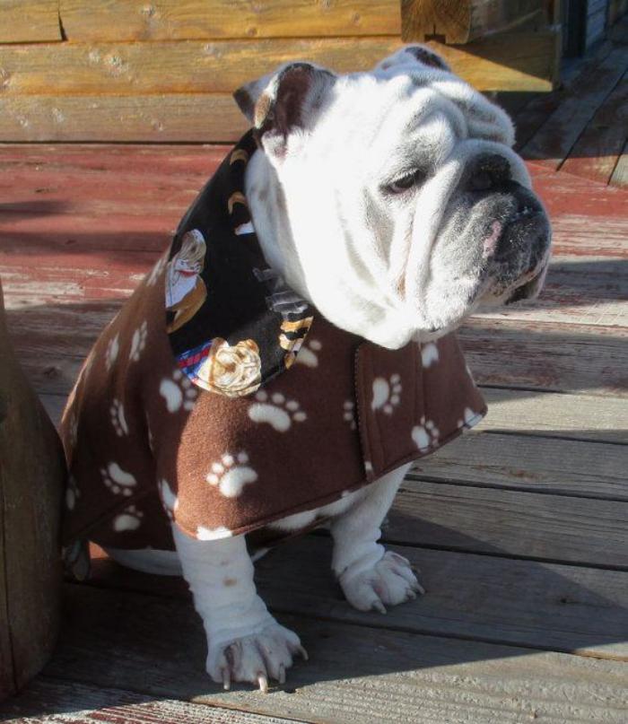 manteau-pour-chien-manteau-chien-original