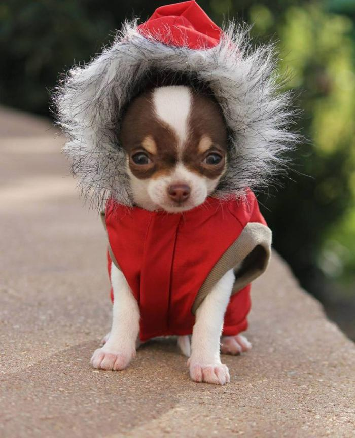 manteau-pour-chien-manteau-de-chien-rouge-avec-capuche