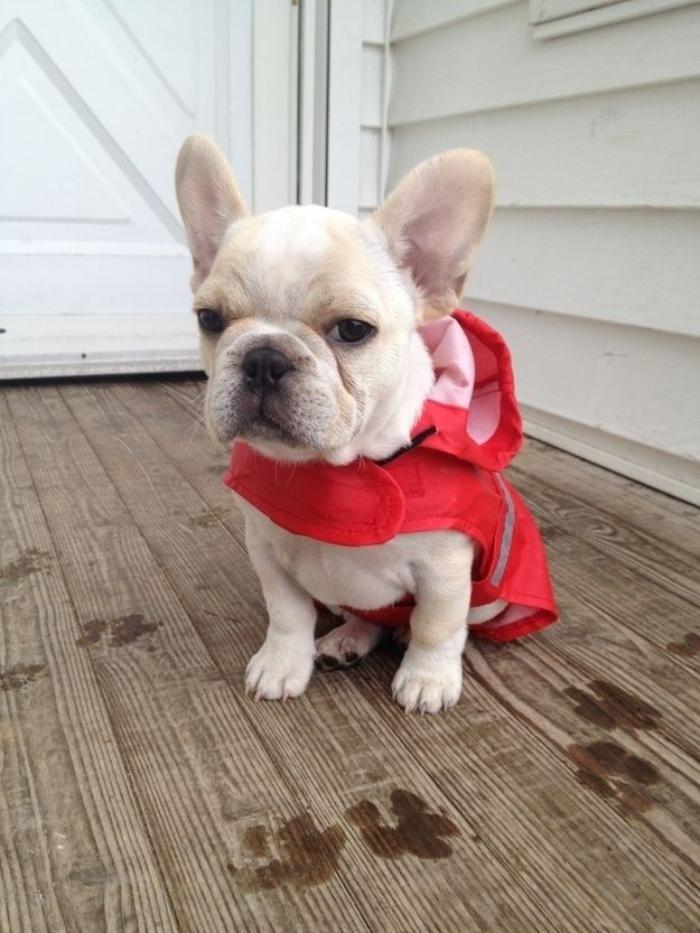 manteau-pour-chien-manteau-de-pluie-chien