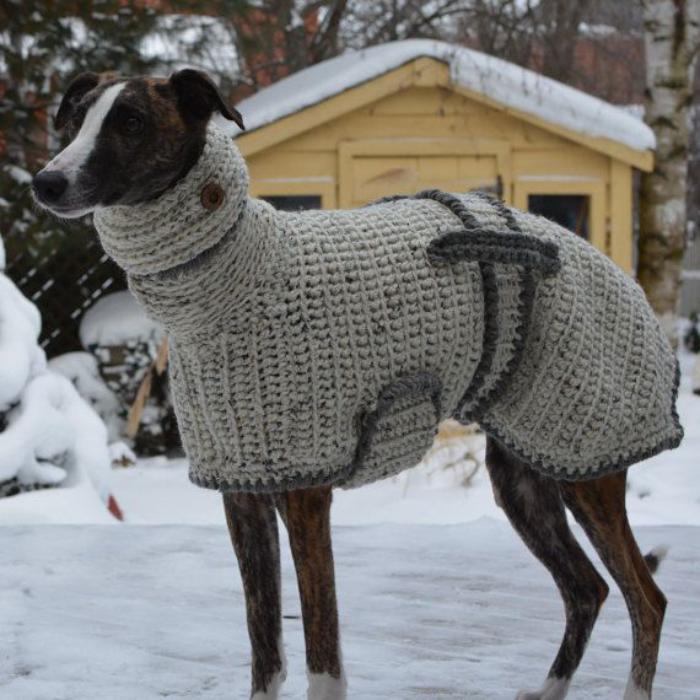 Quel Manteau Pour Chien Pour Votre Ami 224 Quatre Pattes