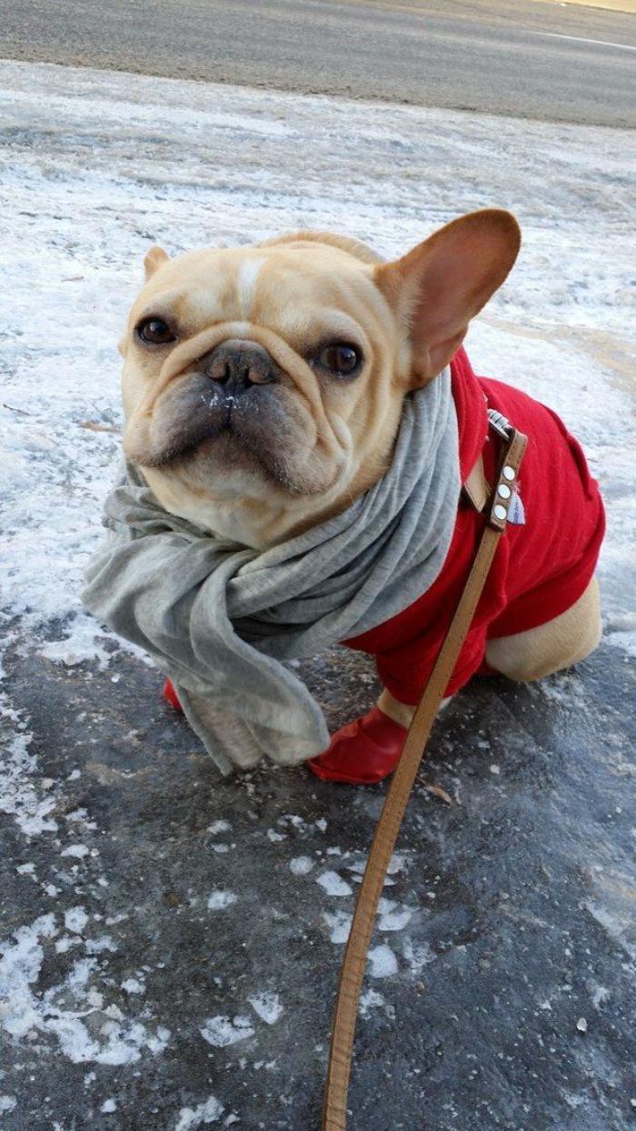 manteau-pour-chien-manteau-rouge-chien