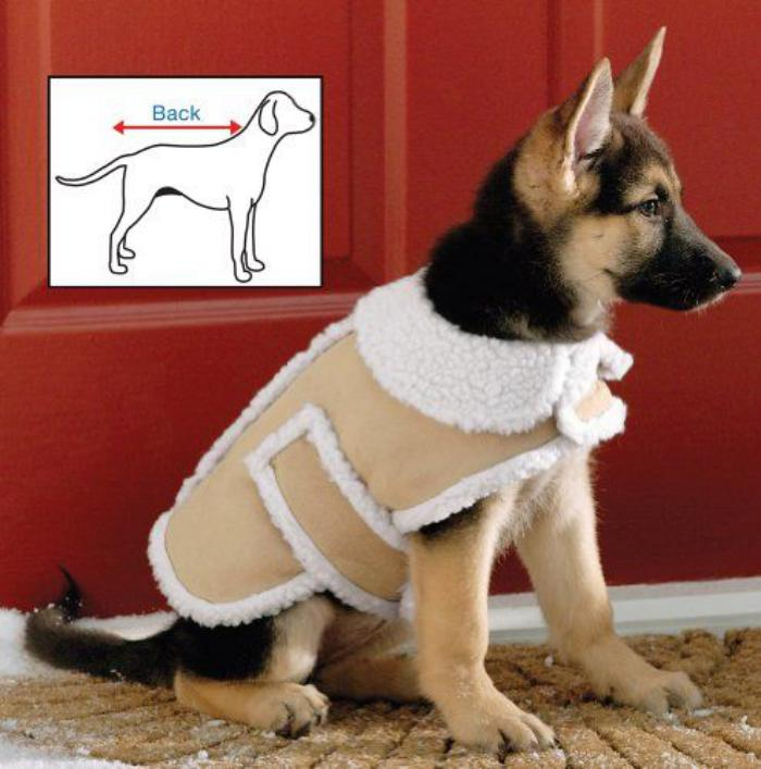 manteau-pour-chien-mode-pour-chiens-accessoires-d'animaux