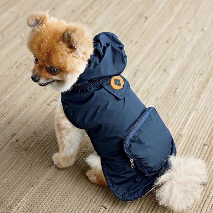 manteau-pour-chien-mode-pour-chiens-originale