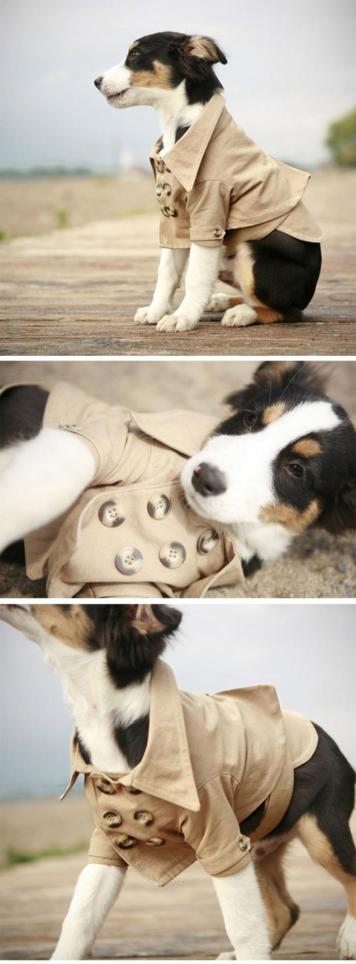 manteau-pour-chien-mode-pour-chiens