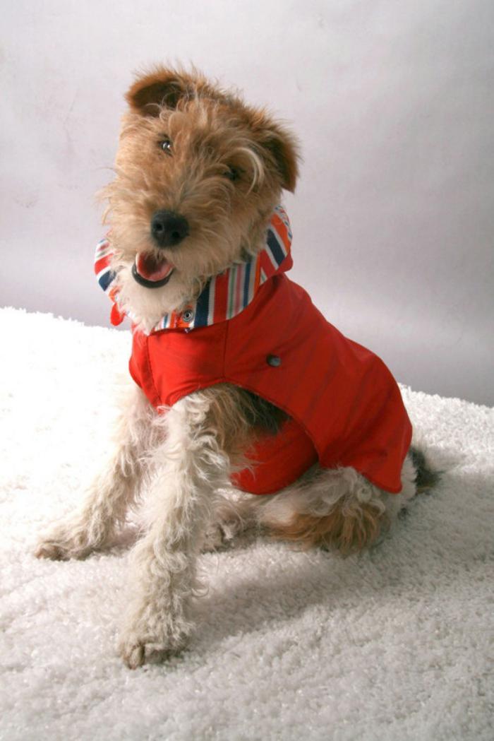 manteau-pour-chien-rouge-beau-manteau-chien