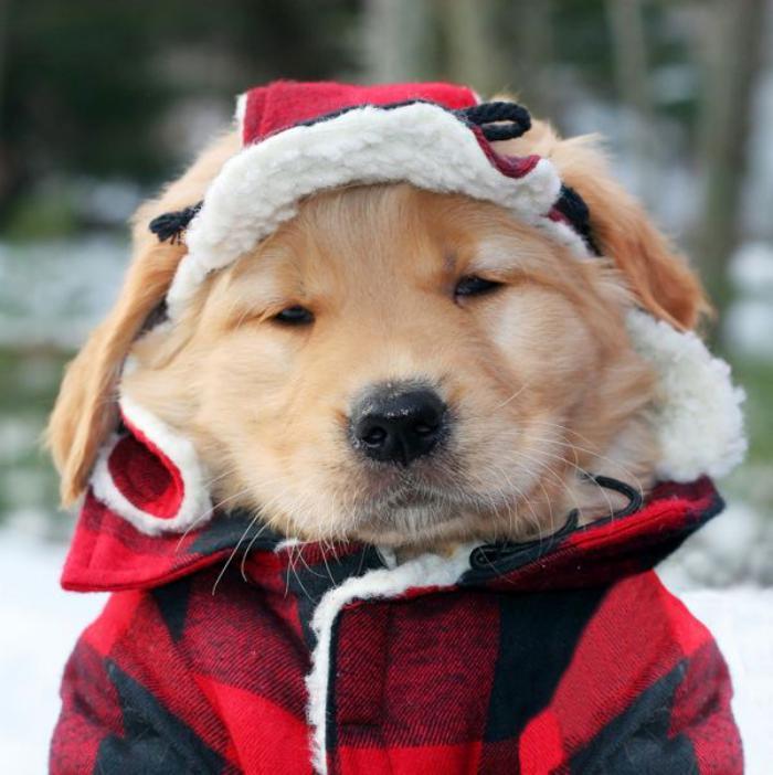 manteau-pour-chien-très-sympathique