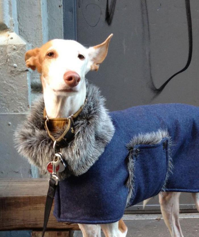 manteau-pour-chien-vetement-chaud-pour-chien