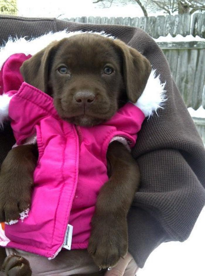 manteau-pour-chien-vetement-pour-chien-et-un-chiot-mignon