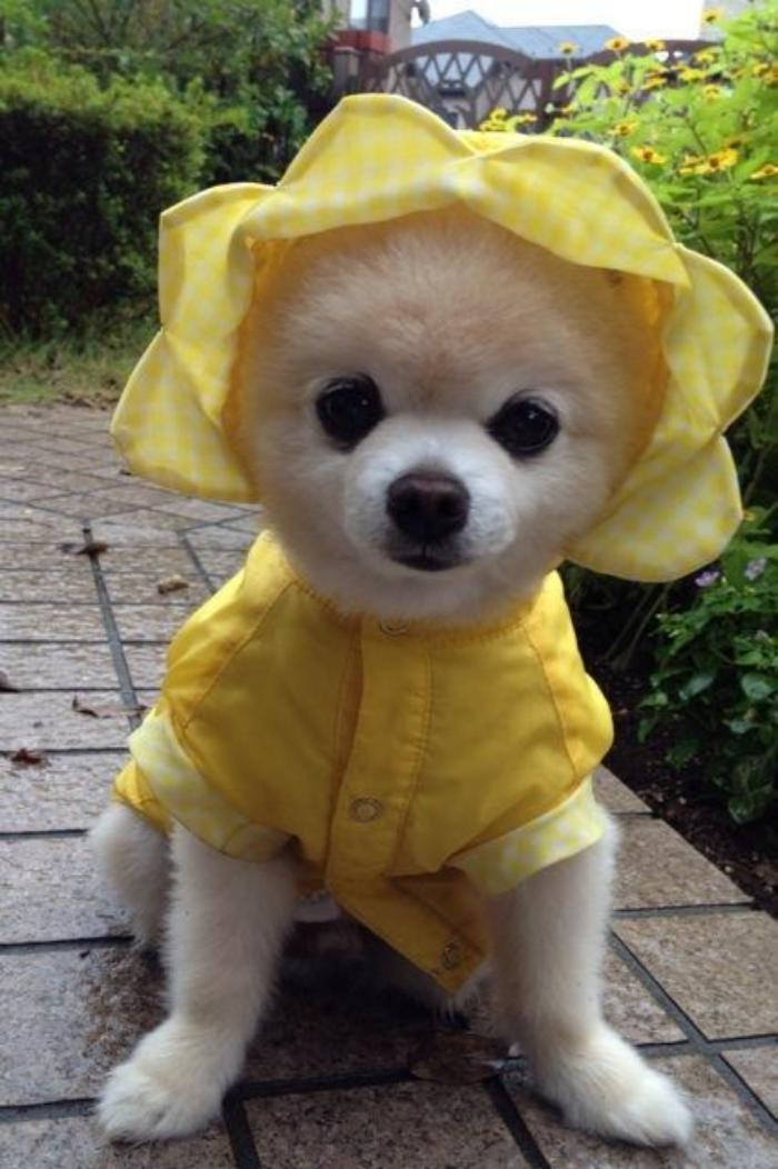 manteau-pour-chien-vetement-pour-chien-mignon