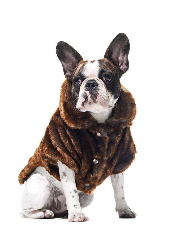 manteau-pour-chien-vetement-pour-chien-original