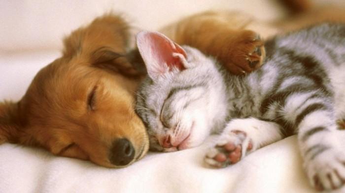 mignon-chaton-petit-chaton-mignon-chaton-image-amour