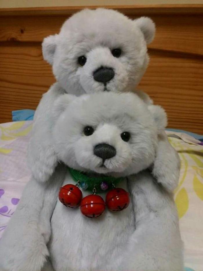 ourson-en-peluche-deux-oursons-en-peluche-charmants