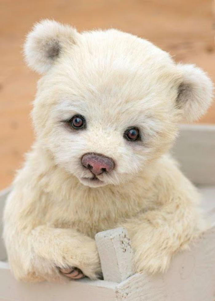 ourson-en-peluche-ourson-blanc-en-peluche
