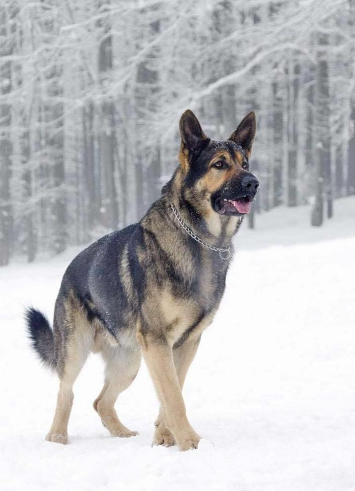 paysage-sous-la-neige-paysage-canadien-chien