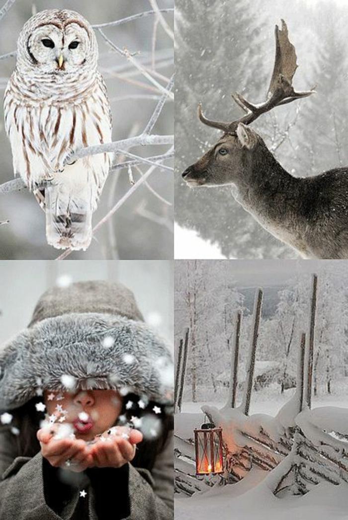 paysage-sous-la-neige-paysage-canadien-les-hiboux