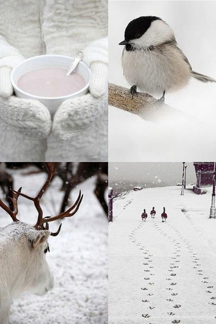 paysage-sous-la-neige-paysage-canadien-oiseaux