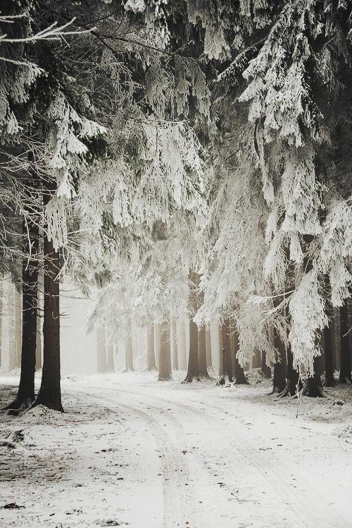 photos-hiver-fond-neige-montagne-photo- fond-d-écran-hiver-neige-arbres