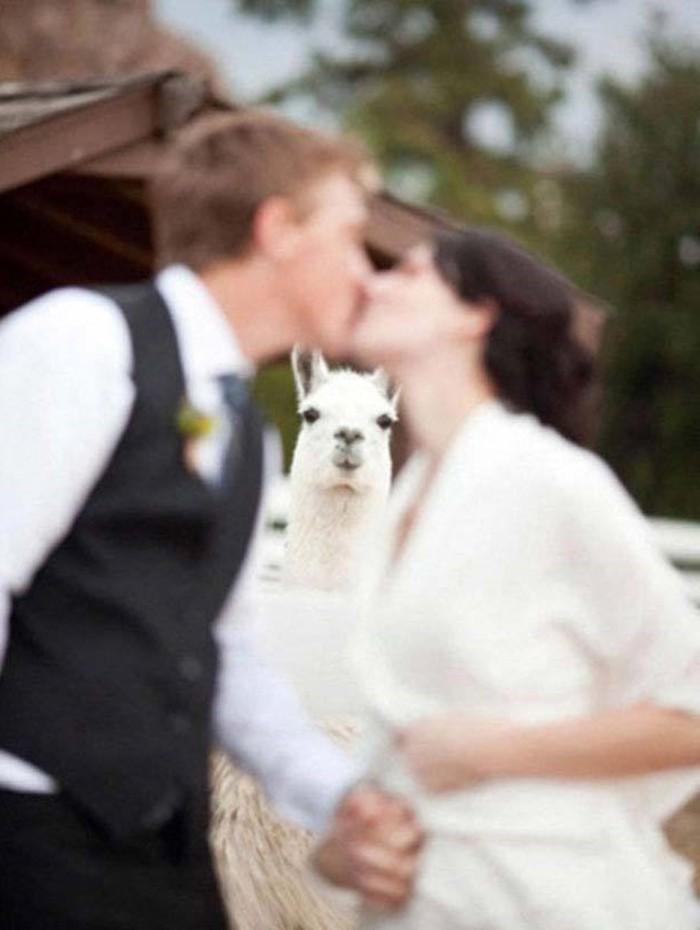 photos-mariage-originales-album-photo-mariage-original-lamma