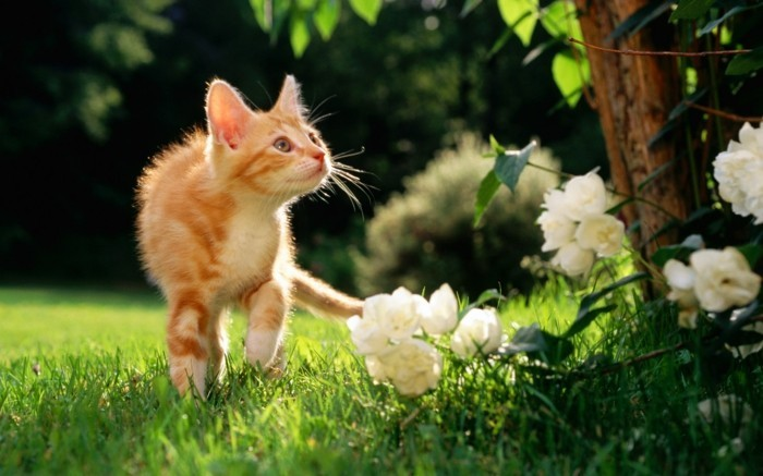 plus-adorable-photo-chaton-mignon-image-chaton-mignon-free