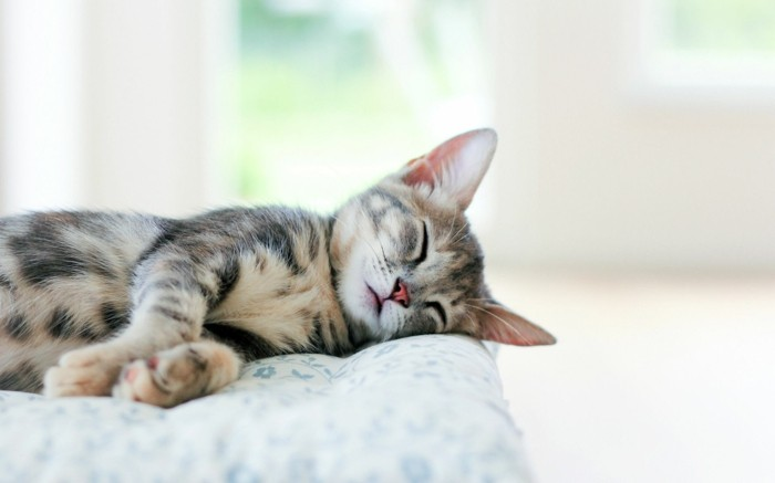 plus-adorable-photo-chaton-mignon-image-chaton-mignon-someil