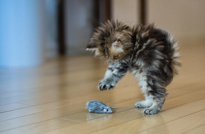 plus-adorable-photo-chaton-mignon-image-chaton-mignon-sourise