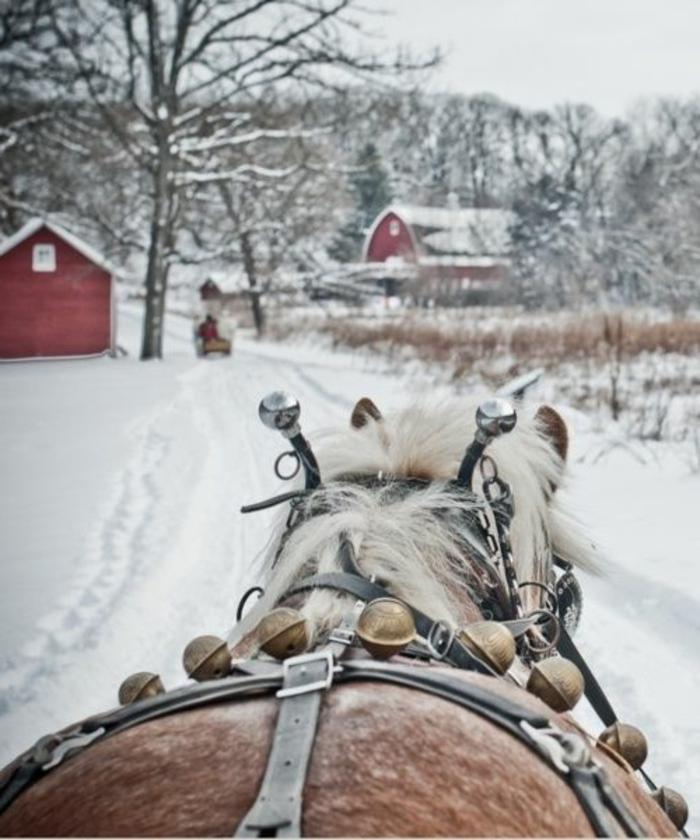 seigneurial-image-montagne-paysage-neige-images-de-paysages-cheval