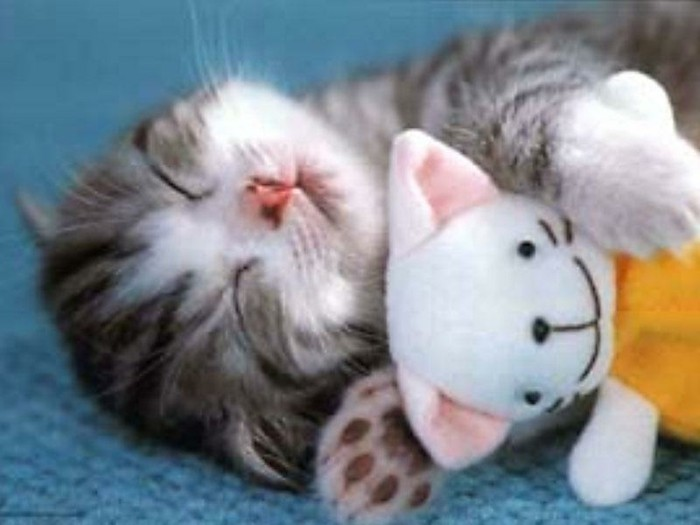 someil-fond-ecran-chaton--photo-de-chaton-mignon-chatons-mignon