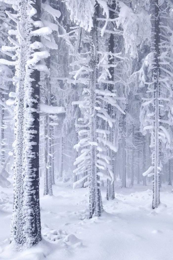 un-fond-d-écran-hiver-gratuit-fond-d-écran-gratuit-paysage-cool