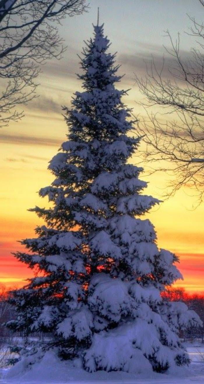 un-fond-d-écran-hiver-gratuit-fond-d-écran-gratuit-paysage-coucher-de-soleil-paysage-d'hiver