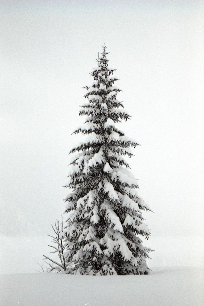 un-fond-d-écran-hiver-gratuit-fond-d-écran-gratuit-paysage-hiver-paysage-d'hiver