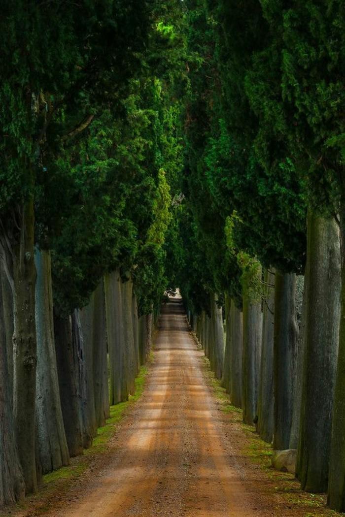 val-d-orcia-paysage-de-toscane-italie-champs-foret-italien-les-belles-vues-italiennes