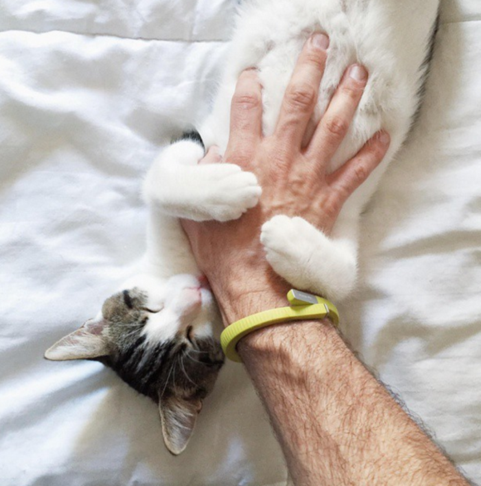 vos-image-de-chaton-trop-mignon-images-de-chaton-amour