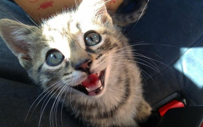 vos-image-de-chaton-trop-mignon-images-de-chaton-sourire