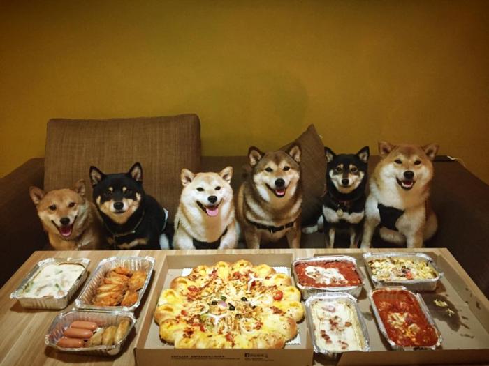 votre-pizza-italienne-prepatation-facile-délicieuse-pizza-exquis-chiens-amis
