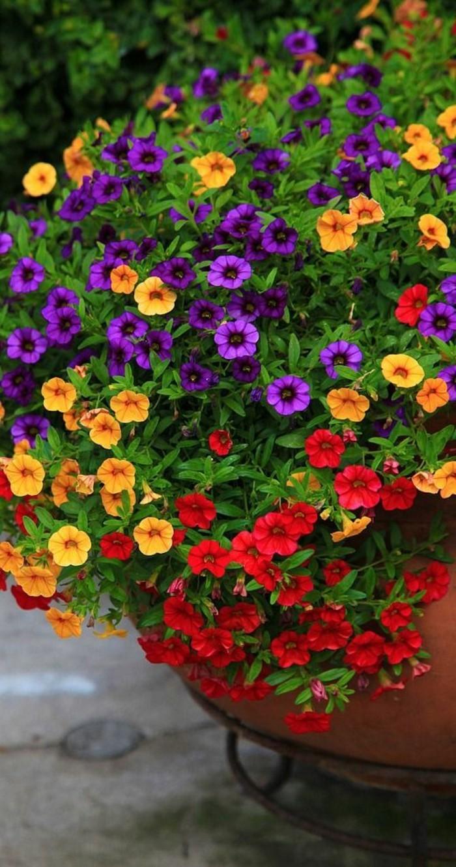 0-amenagement-balcon-quels-fleurs-choisir-pour-bien-amenager-le-balcon