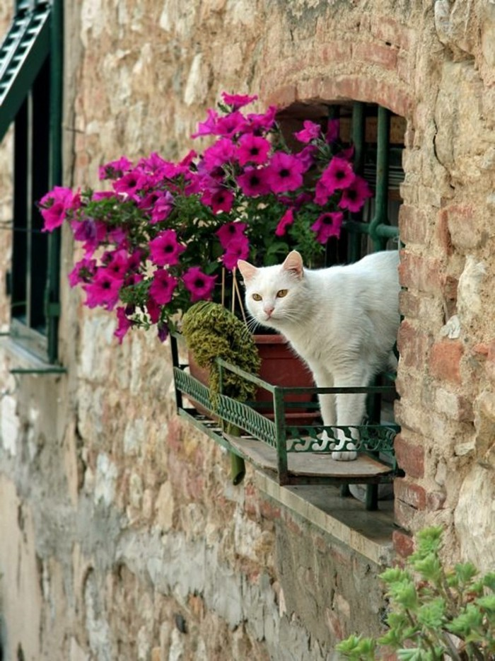 0-une-idee-pour-la-fenetre-de-la-maison-comment-fleurir-la-fenetre-de-votre-maison