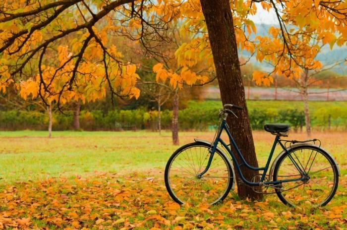 Originale-vélo-d-occasion-pour-la-ville-rouler-à-deux-roux-automne