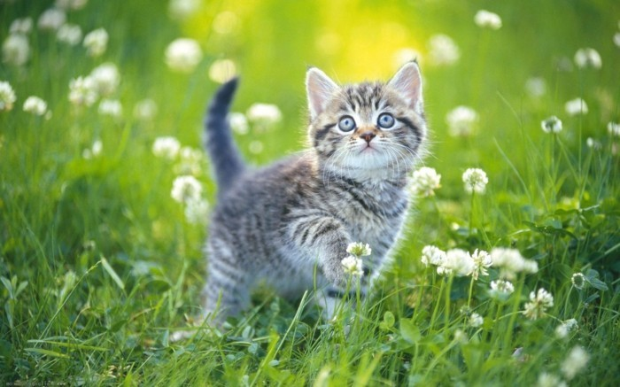 Meilleur photo du chat mignon c 39 est a vous de d cider - Photo de bebe chat ...