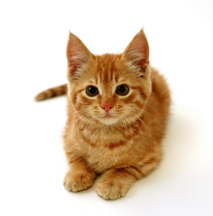 bébé-chat-mignon-chaton-mignon-coloriage-chat-coloriage-chaton