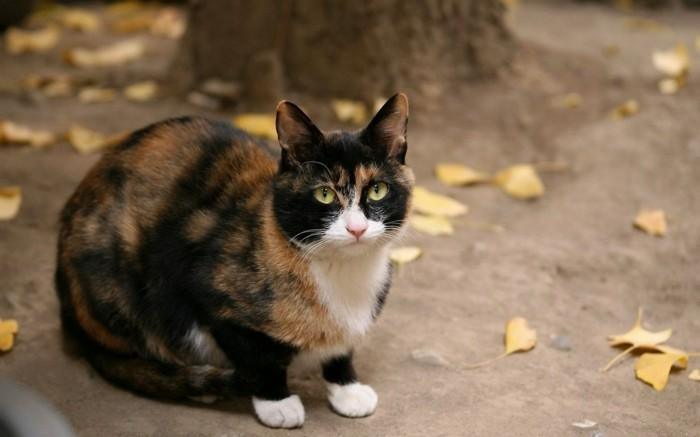 bébé-chat-mignon-image-de-chat-trop-mignon-chats-mignons-chaton-mignon