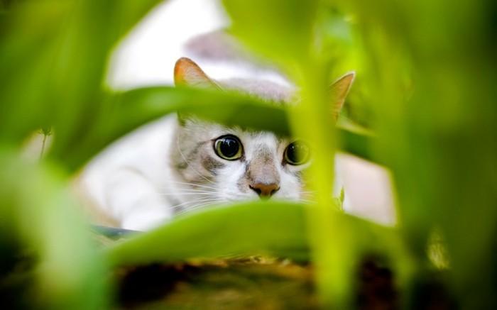 bébé-chat-petit-chat-mignon-image-mignonne-chaton-trop-mignon