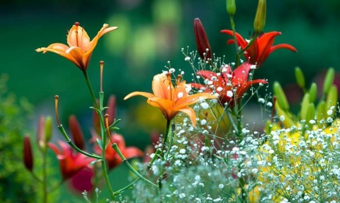 beauté-de-la-nature-belles-images-paysage-fleuri-photo-emouvante-nature-en-vert